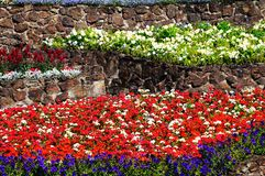 Colourful flowerbeds. Stock Photos