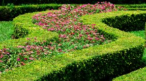 Colourful Flowerbeds Royalty Free Stock Photography