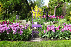 Colourful Flowerbeds Stock Images
