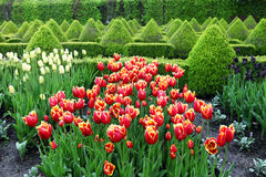 Colourful Flowerbeds. Royalty Free Stock Images