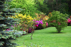 Colourful flowering shrubs in a spring garden. In shades of yellow, pink and red bordering a neatly manicured lush green lawn with a backdrop of dense trees royalty free stock images