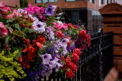 Colourful Flowers on the black railings in the rain Stock Photos