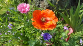 Colourful Flowers Stock Image