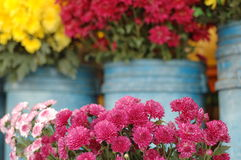 Colourful flowers. Bunches of flowers sold at a market Royalty Free Stock Photo