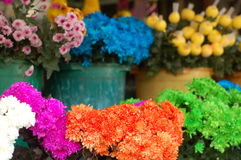 Colourful flowers. Bunches of colourful flowers sold at a market Stock Photos