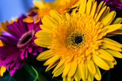 Colourful Flowers. A couple of colour flowers Stock Images