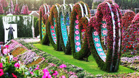 Colourful flowers designed in heart shape in Miracle garden,Dubai. Miracle garden filled with colourful and beautiful flower arranged in a heart shape design royalty free stock photography