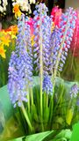 Colourful flowers Royalty Free Stock Photos