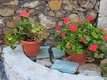 Colourful Flowers, Greek Island Royalty Free Stock Images