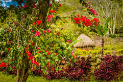 Colourful flowers in greenery Royalty Free Stock Photography