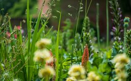 Colourful flowers in a herbaceous border at Eastcote House Gardens, historic walled garden, London UK