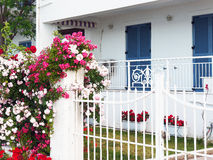 Colourful Flowers on House Front Wall Royalty Free Stock Image
