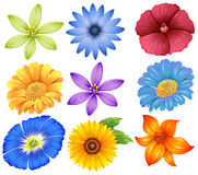 Colourful flowers. Illustration of the colourful flowers on a white background Stock Photos