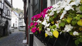 Colourful flowers. Pretty flowers in a old town royalty free stock photography