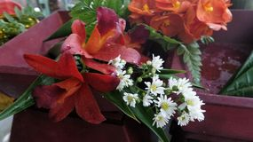 Colourful Flowers in red wooden tray Stock Photography