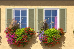 Colourful flowers at the window. Stock Images