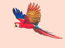 Colourful flying parrot. Colourful beautiful flying parrot toned Royalty Free Stock Photos
