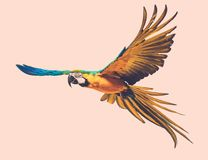 Colourful flying parrot. Colourful beautiful flying parrot toned Royalty Free Stock Photo