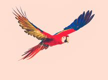 Colourful flying parrot Stock Photography