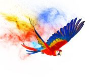 Colourful flying parrot Royalty Free Stock Photo