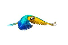 Colourful flying parrot. Isolated on white Royalty Free Stock Photography