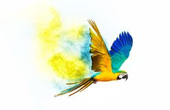 Colourful flying parrot. Isolated on white Stock Photos