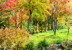 Colourful forest in Autumn Stock Photography