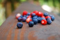 Colourful forest berries Royalty Free Stock Photos