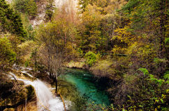 Colourful forest in Jiuzhaigou National Park,Sichuan China Stock Images