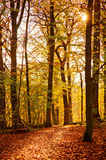 Colourful forest path Stock Photography