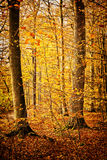 Colourful forest scene Royalty Free Stock Photo