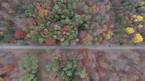 Colourful forest trees in autumn stock video footage