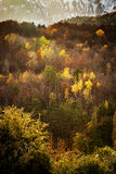 Colourful forest trees in the autumn season Royalty Free Stock Photography