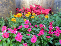 Colourful Garden. A landscape with beautiful and colourful flowers Royalty Free Stock Photography
