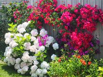 Colourful garden Royalty Free Stock Images