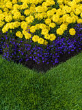Colourful Garden Flower Bed. Close up of a colourful garden flower bed and lawn Royalty Free Stock Photography
