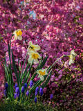 Colourful garden Stock Photos