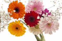Colourful Gerbera daisies on a sparkly pastel Royalty Free Stock Photo
