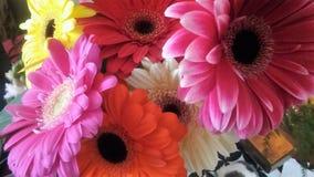 Colourful gerberadaisy na mój stole zdjęcia stock