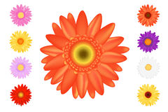 Colourful Gerbers Set. Vector Stock Image