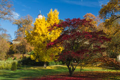 Colourful gingko and maple tree in autumn Stock Photos
