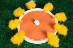 Colourful grupa Wielkanocni kurczątka Zdjęcia Royalty Free