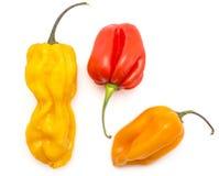 Fresh Habanero chilli isolated on white stock images