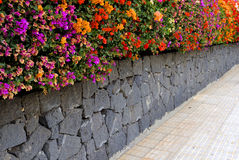 Colourful hedge Stock Photography