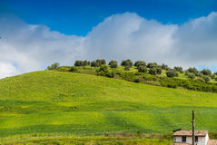 Colourful hills of Tuscany in spring season Stock Photos