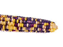 Colourful indian corn Royalty Free Stock Image