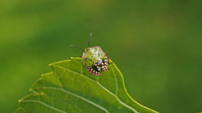 Colourful insect. At balaton stock images