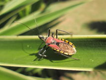Colourful Insect. A very colourful insect on a leaf stock photography