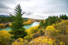 Colourful jesień krajobraz z szmaragdową błękitną rzeką, drzewa z żółtymi liśćmi i sosny, Clutha rzeka Nowa Zelandia fotografia royalty free