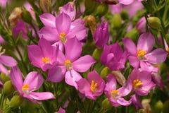 Colourful kwiat Zdjęcie Royalty Free